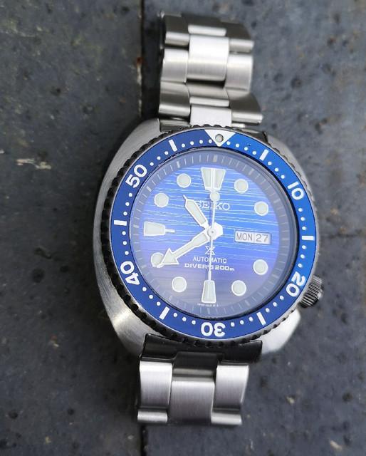 STO-Turtle-01.jpg