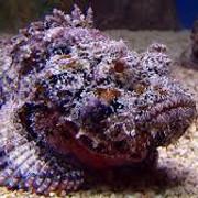 [Image: stonefish-2.jpg]