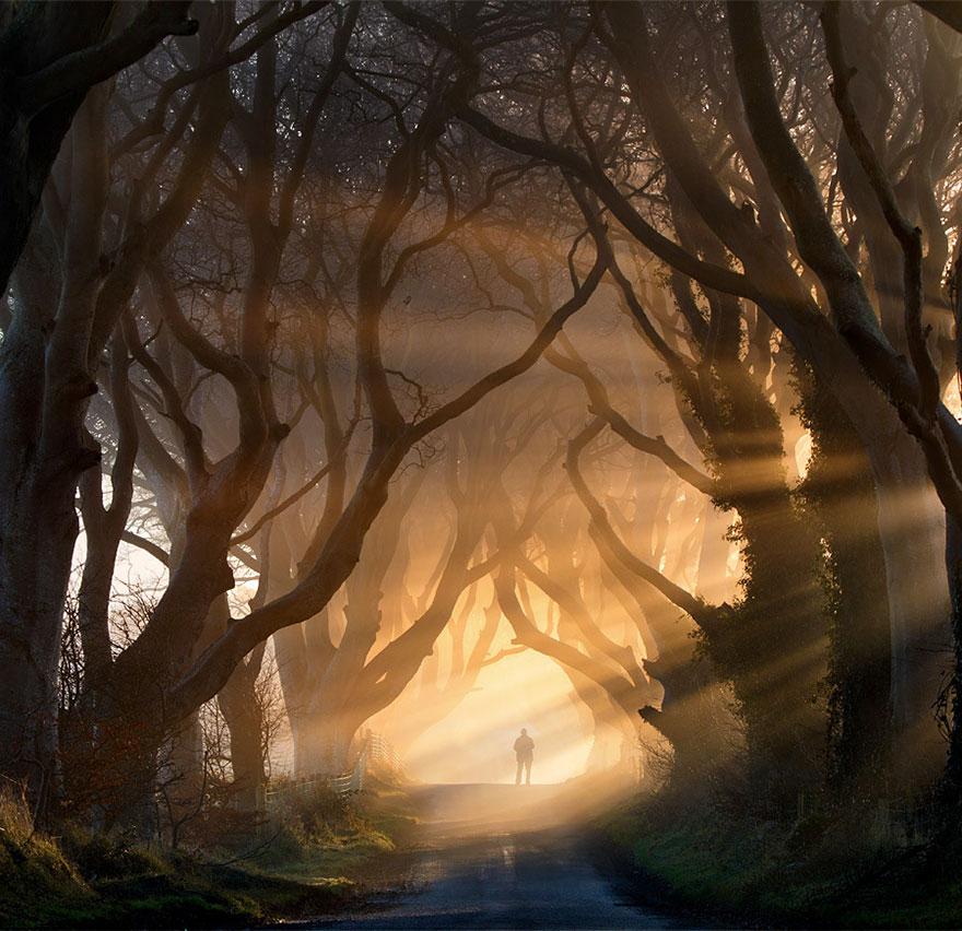 Мрачная аллея в Северной Ирландии-6-1