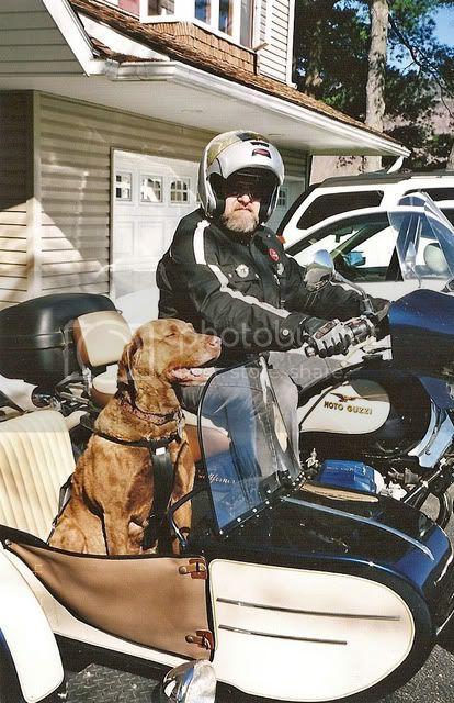 MG-Dog-and-Sidecar