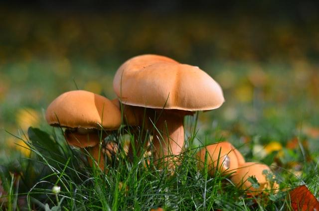 https://i.ibb.co/y0sZ9gz/mushroom-dispensary-online.jpg