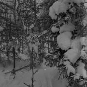 Dyatlov pass 1959 search 27