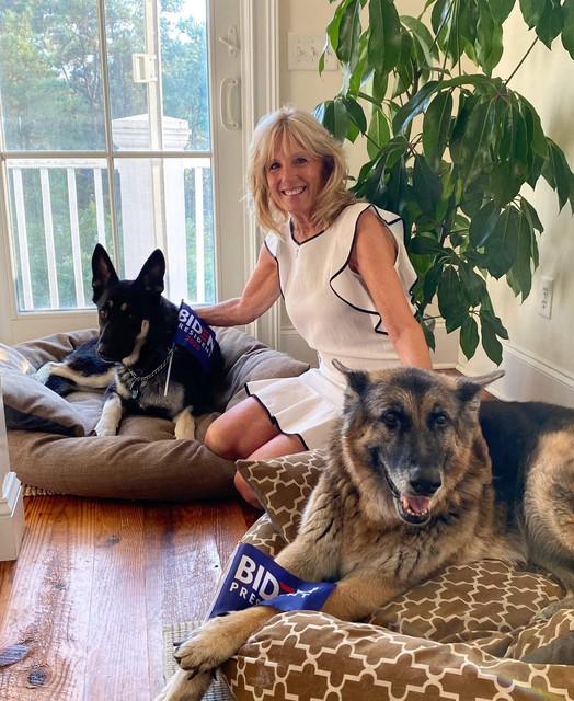 Biden-Dogs