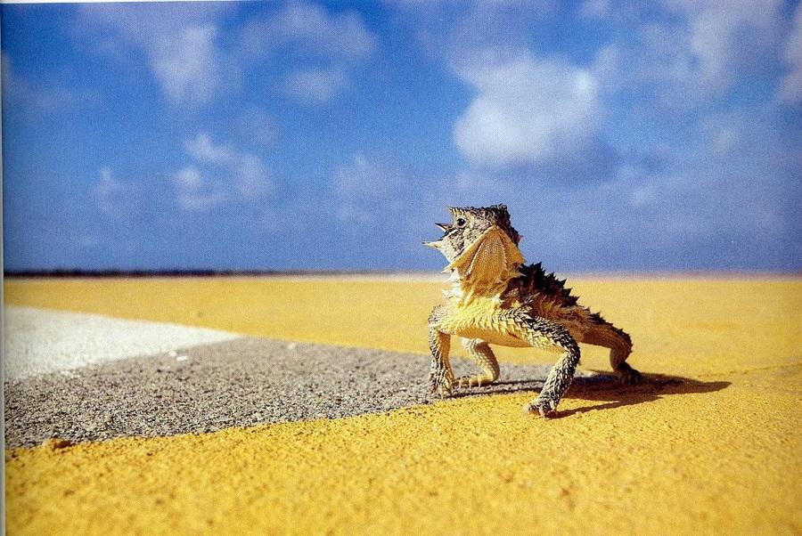 fotografii National Geographic 11