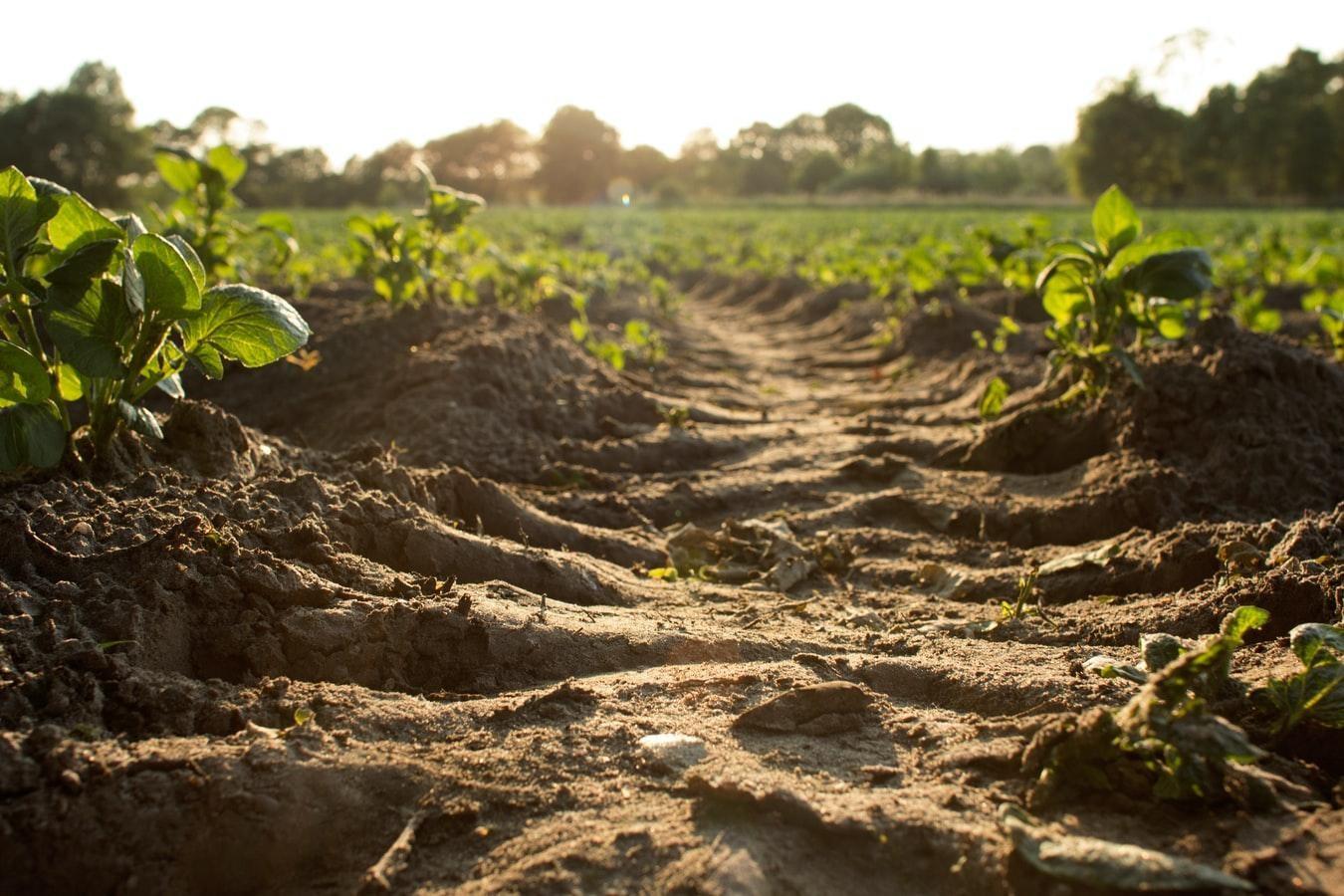 Without-soil-to-flourish