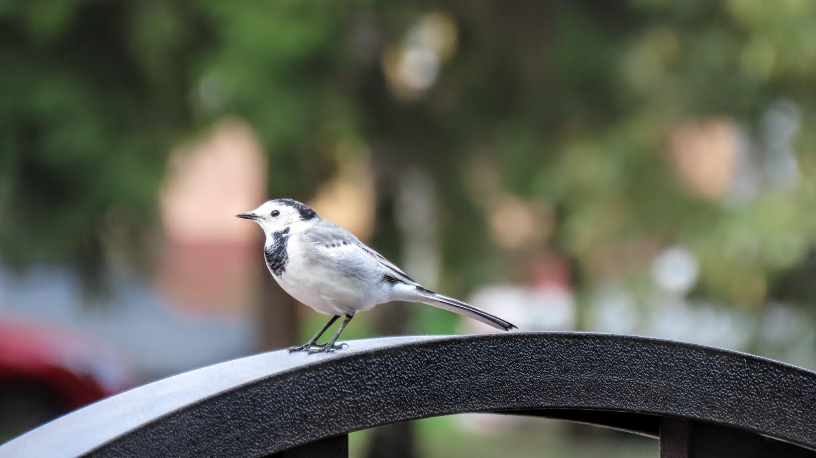 Зеленоглазый и птички 35846407