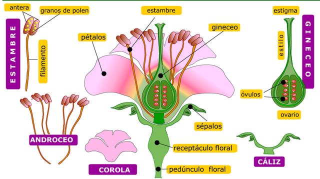 partes-da-flor