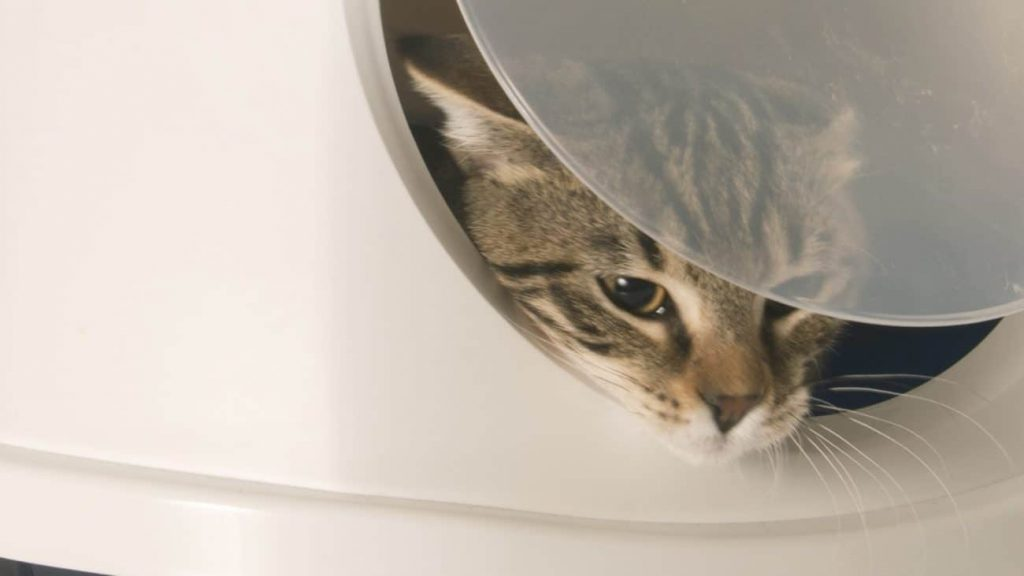 Self-cleaning cat litter box: Which is the best of 2021?