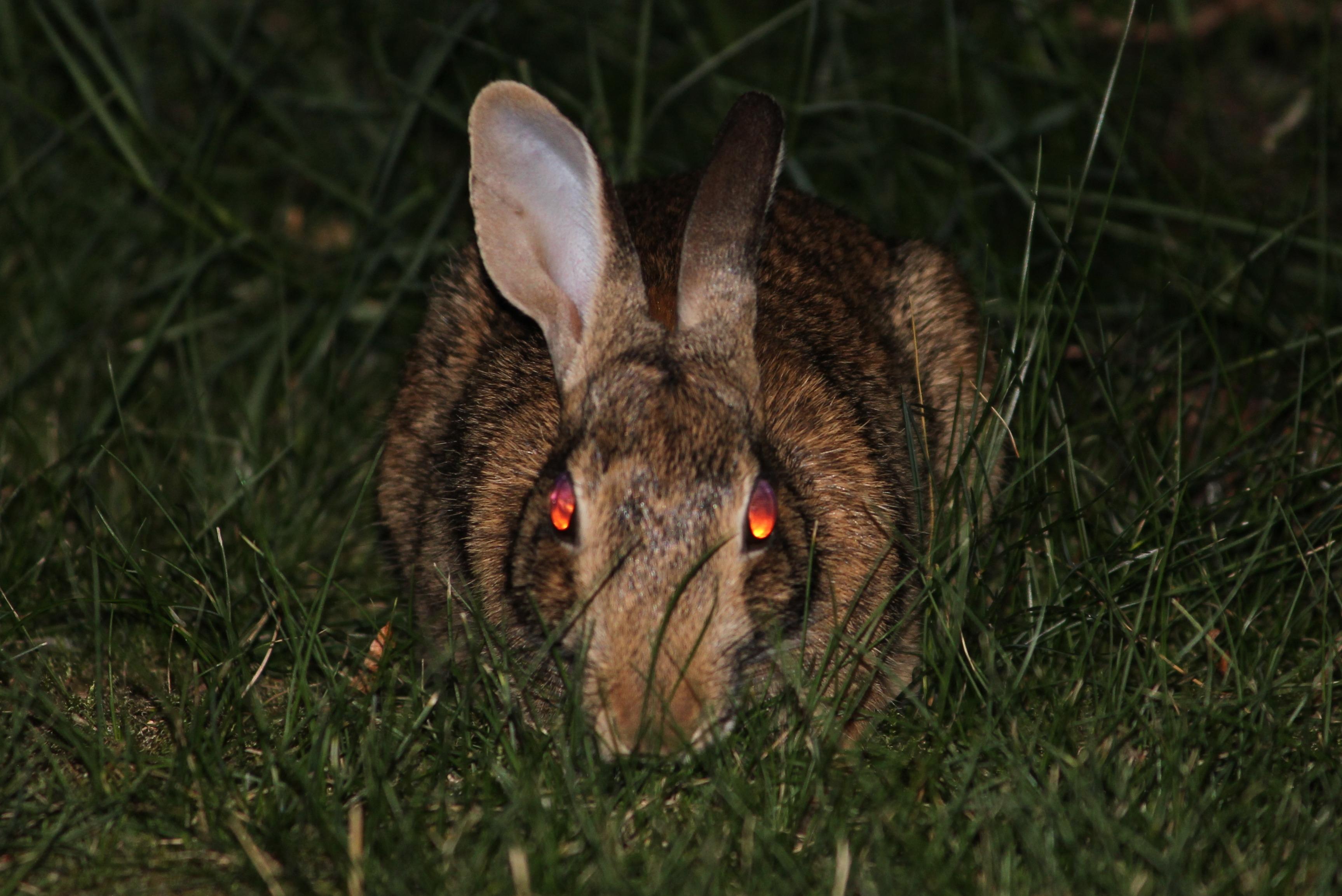 rabbit-111273