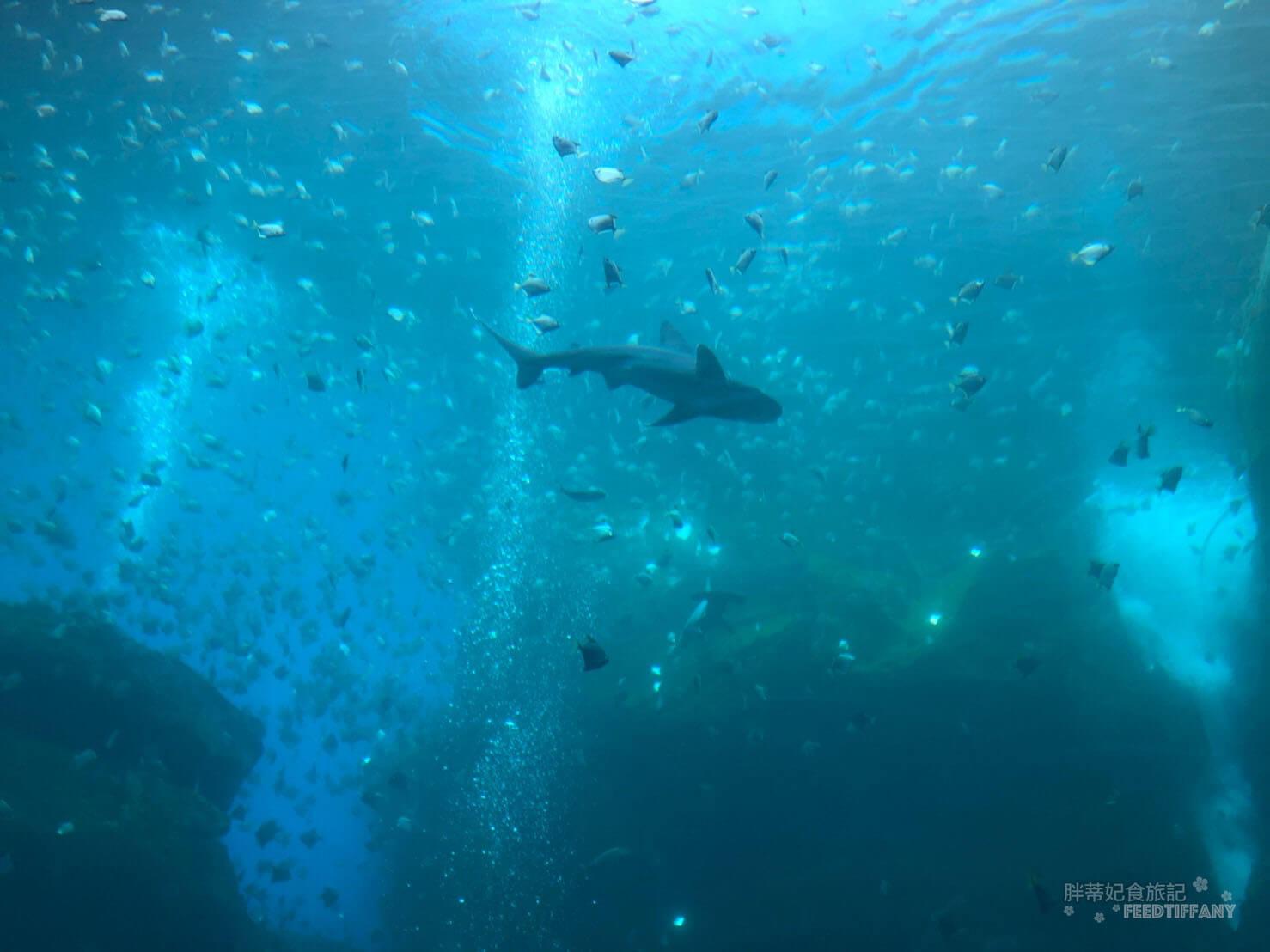 Xpark水族館 福爾摩沙館大玻璃