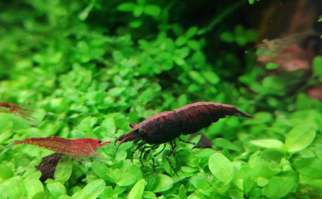 Cool-Shrimp.jpg