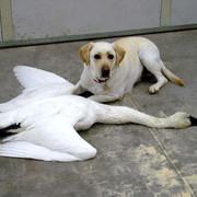 Hammer-Swan06