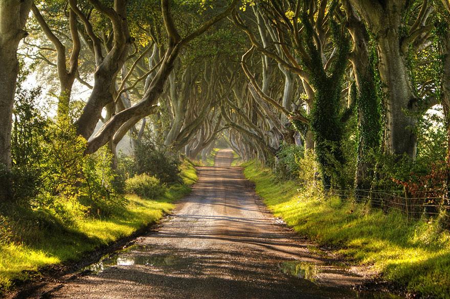 Мрачная аллея в Северной Ирландии-6-2