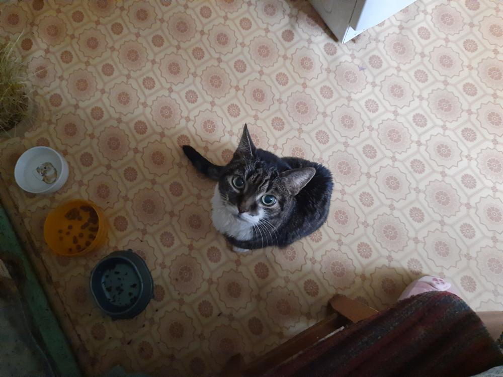 Cat-6.png