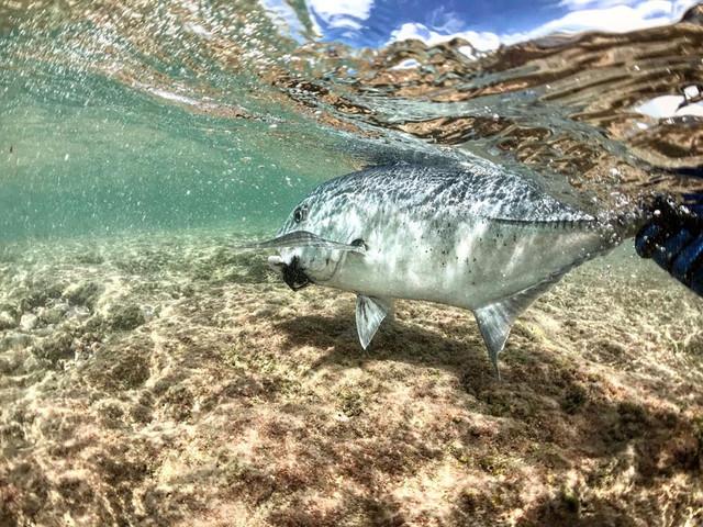 kanton-atoll-gt-giant-trevally-fly-fishing-kiribati-61