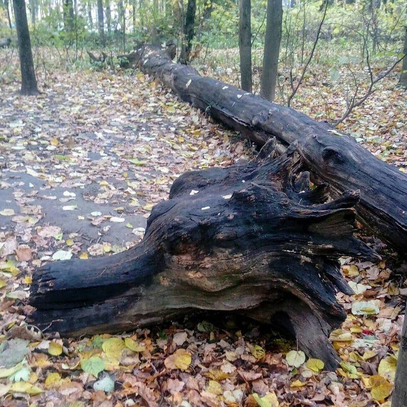 Странные и необычные находки, сделанные в лесах