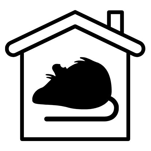 Housing Disrepairs Infestation
