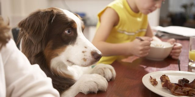 Is Corned Beef Toxic for Dogs?
