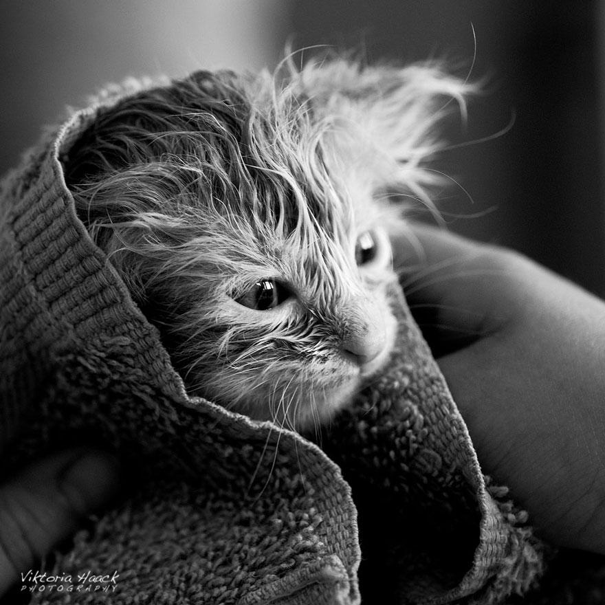 Таинственная кошачья жизнь в чёрно-белых фотографиях-44