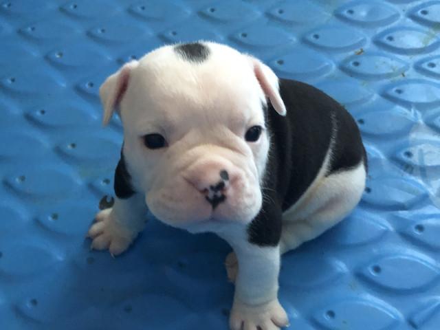 Boy-1-puppy