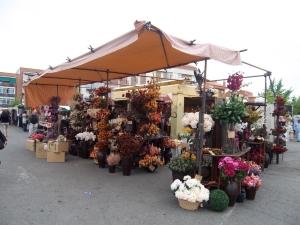 Majadahonda-Flores-Secas