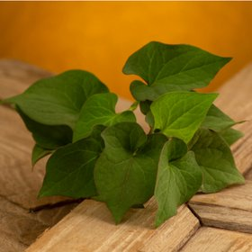 Houttuynia cordata was extracted to remove the peculiar fishy taste essential oil component  The generated foam has excellent holding power