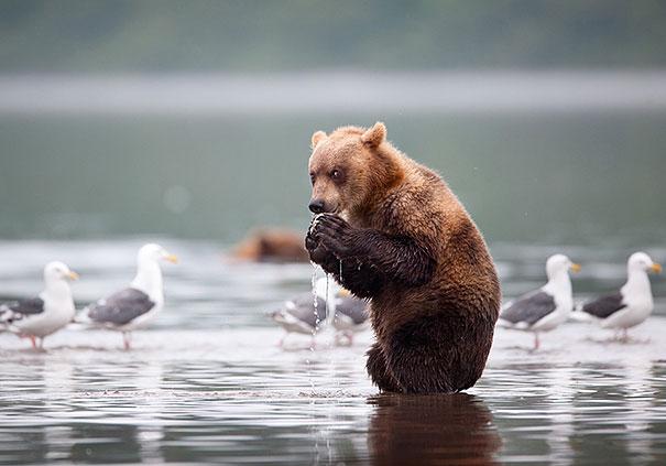 Медведи, такие медведи-7