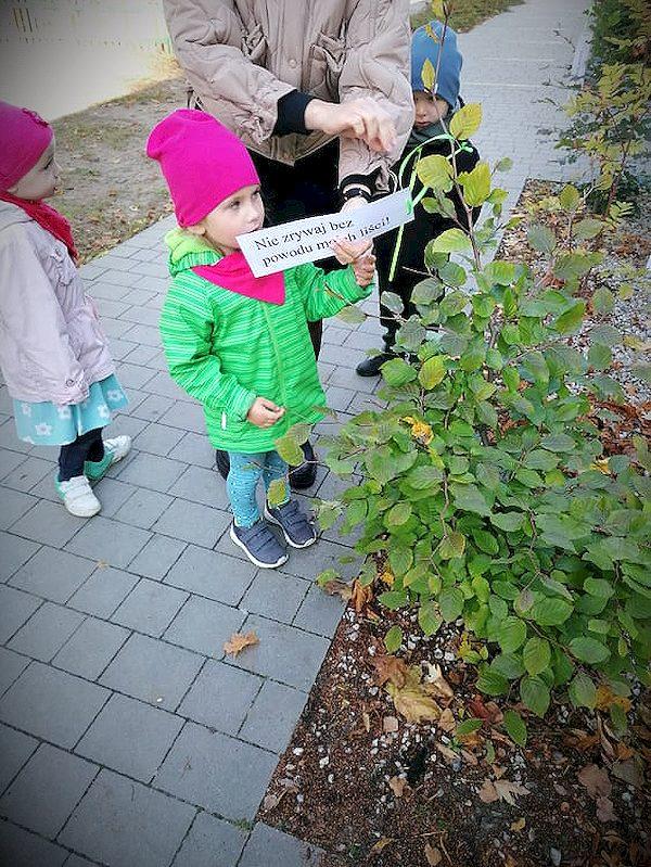 Ekolog-i-s-wie-to-drzewa-215.jpg