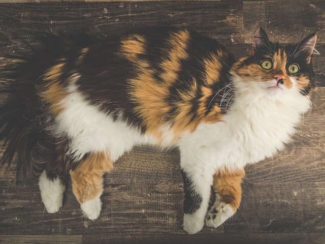 kiwi's character storage! Longhair-cat
