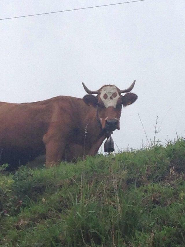 Death-cow.jpg