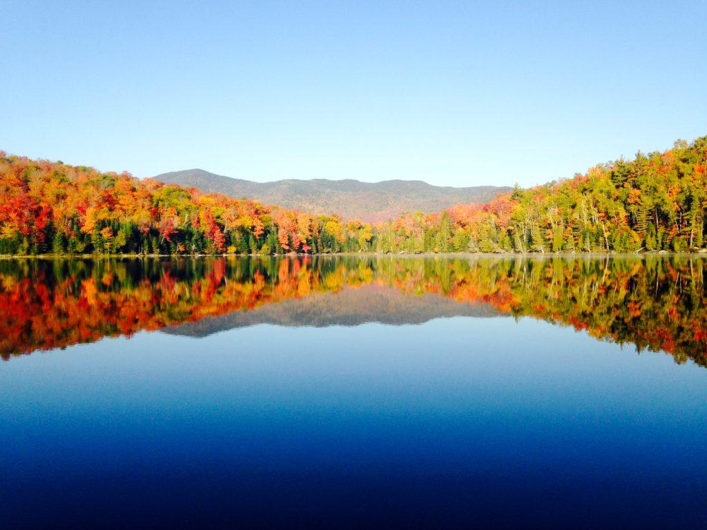В конце концов, деревья – это просто красиво / ©Thomas Crowther