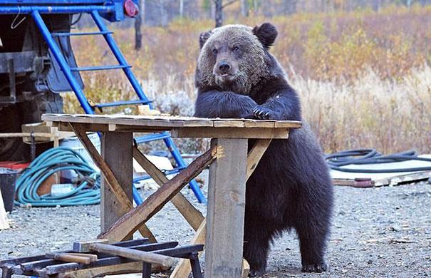 Медведи, такие медведи-30
