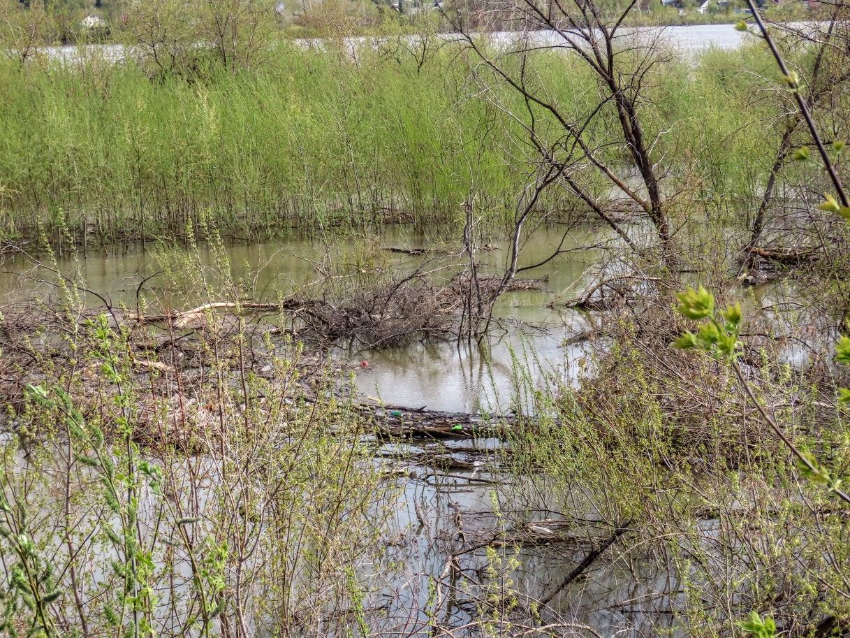 Уровень воды в Томи снова повысился IMG-7762