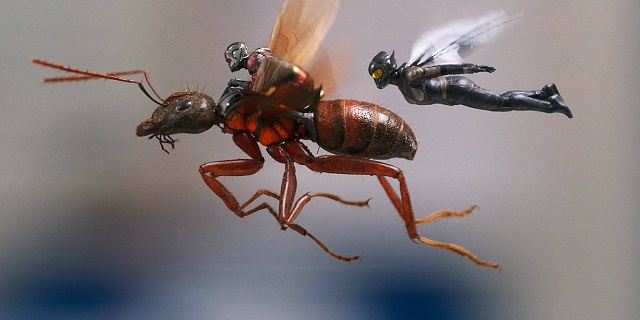 Ant-Wasp