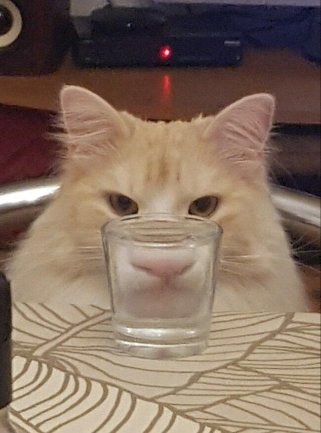 кот и стопка