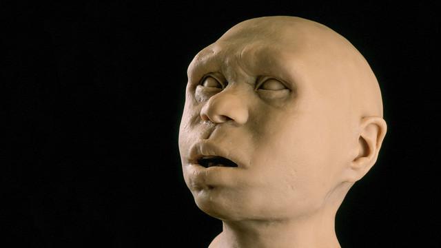 Homo-antecessor-reconstruction-Reconstruction-of-a-Homo-antecessor-head-from-the-skull-of-El-Nino-de
