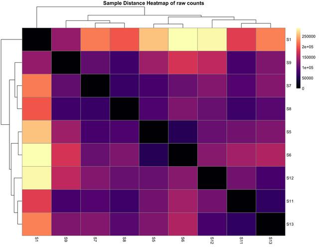 Raw-Counts-Euclid-Samp-Distance