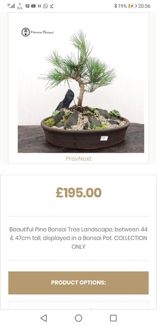 Tremendous Wee Trees Bonsai Help Forum Advice For All View Topic Wiring A Wiring 101 Cajosaxxcnl