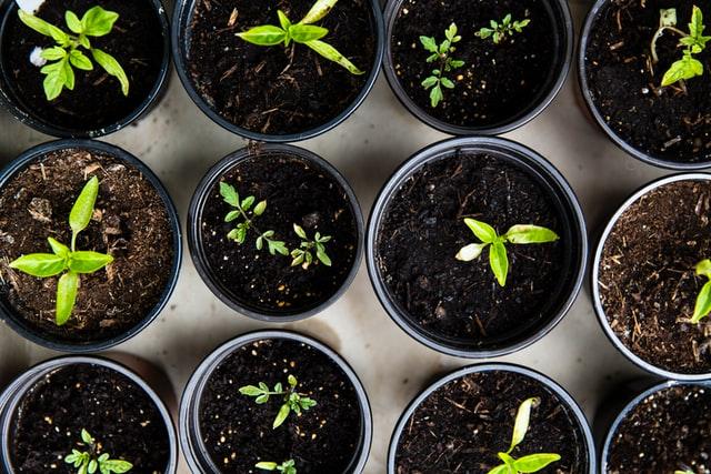 https://i.ibb.co/zVXkz8y/seedling-plant.jpg