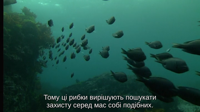 cap-E07-Tidal-Seas-2001-BDRip-AVC-2x-UKR-ENG-sub-2x-UKR-ENG-Hurtom-00-27-03-01