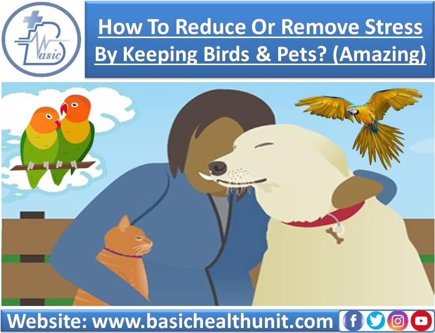 How To Reduce Or Remove Stress By Keeping Birds & Pets? (Amazing)