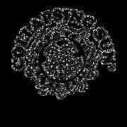 sunndyd-logo