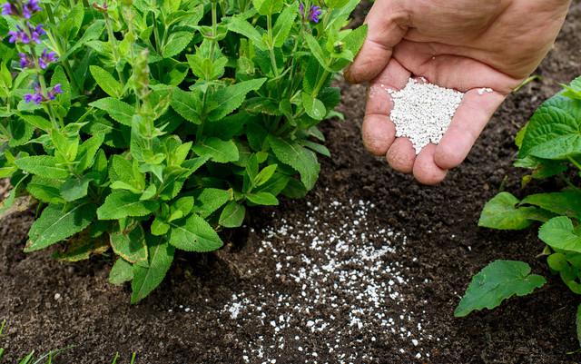 Effective Natural Pesticides Repel Pests, Fertilize Plants Without Harmful Substances
