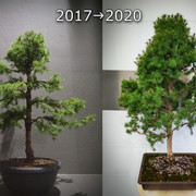 picea-2017-2020