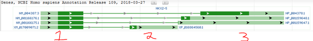 NKX2-5 structure