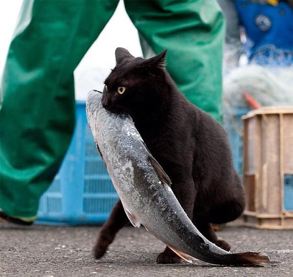 Коты, которых поймали на горячем - 45 отчаянных фотографий - 15