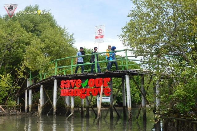 Wisata Edukasi di Kawasan Mangrove Karangsong