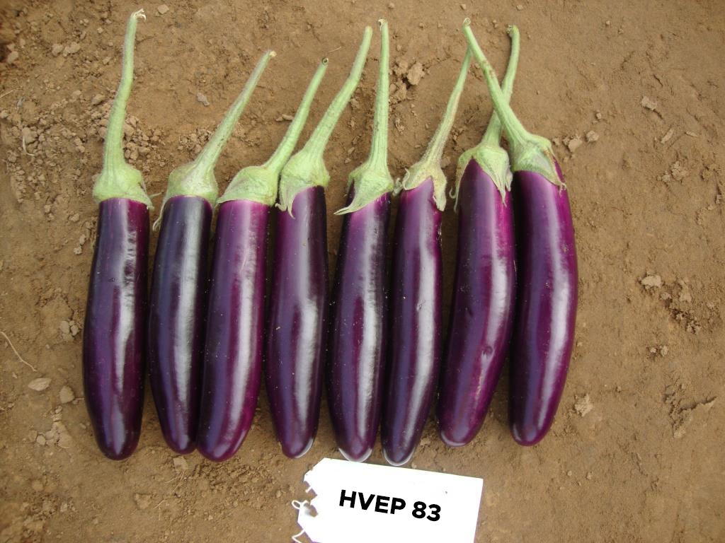HVEP-83