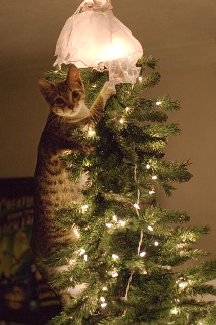 聖誕樹長貓系列,不會長出貓咪的聖誕樹不是一棵好聖誕樹 7