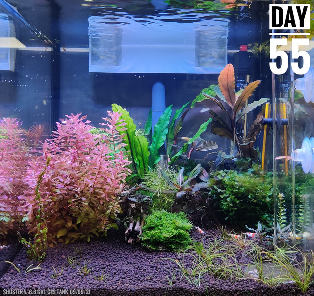 Front view 55days.jpg